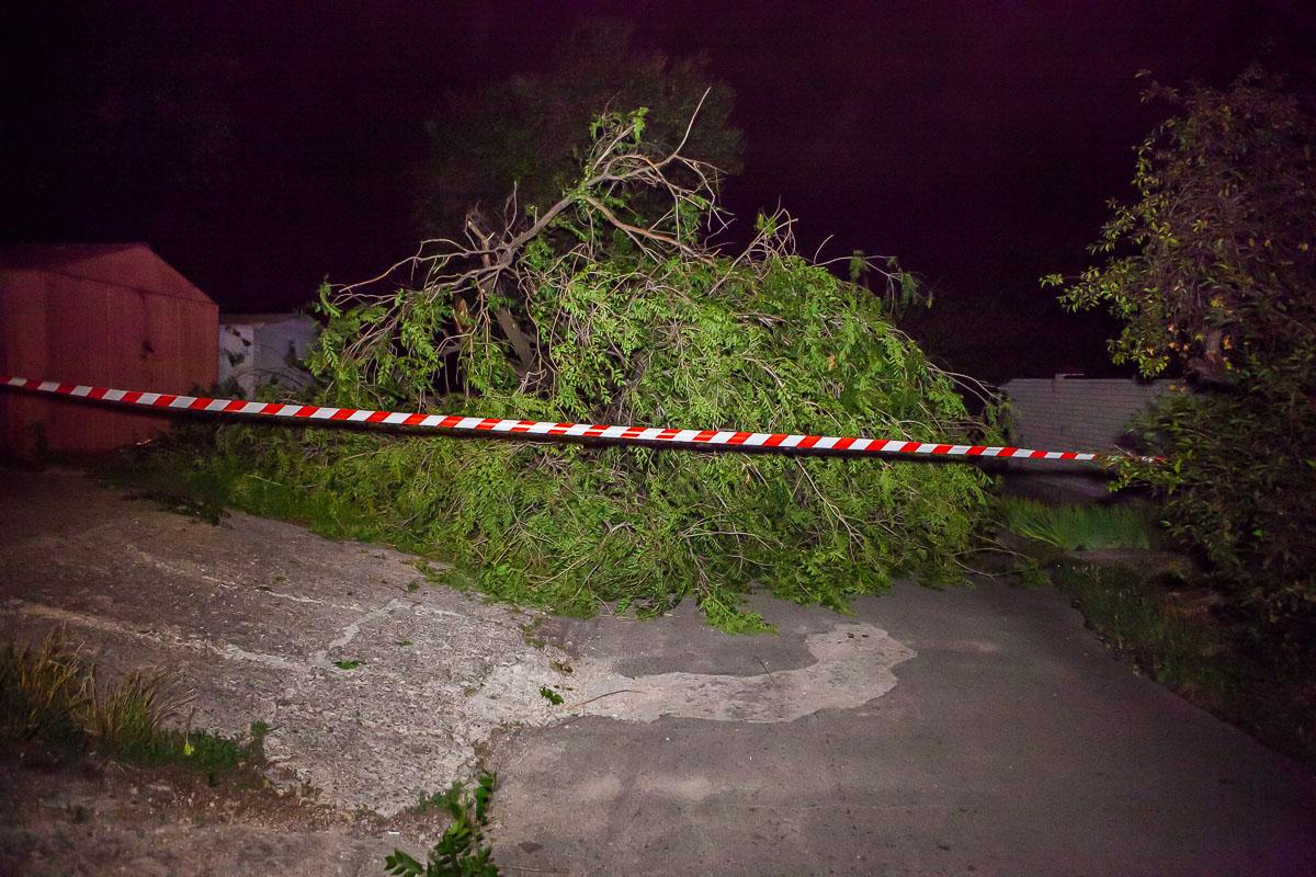 Непогода валила деревья в Днепре на проезжую часть, линии электропередач, дома