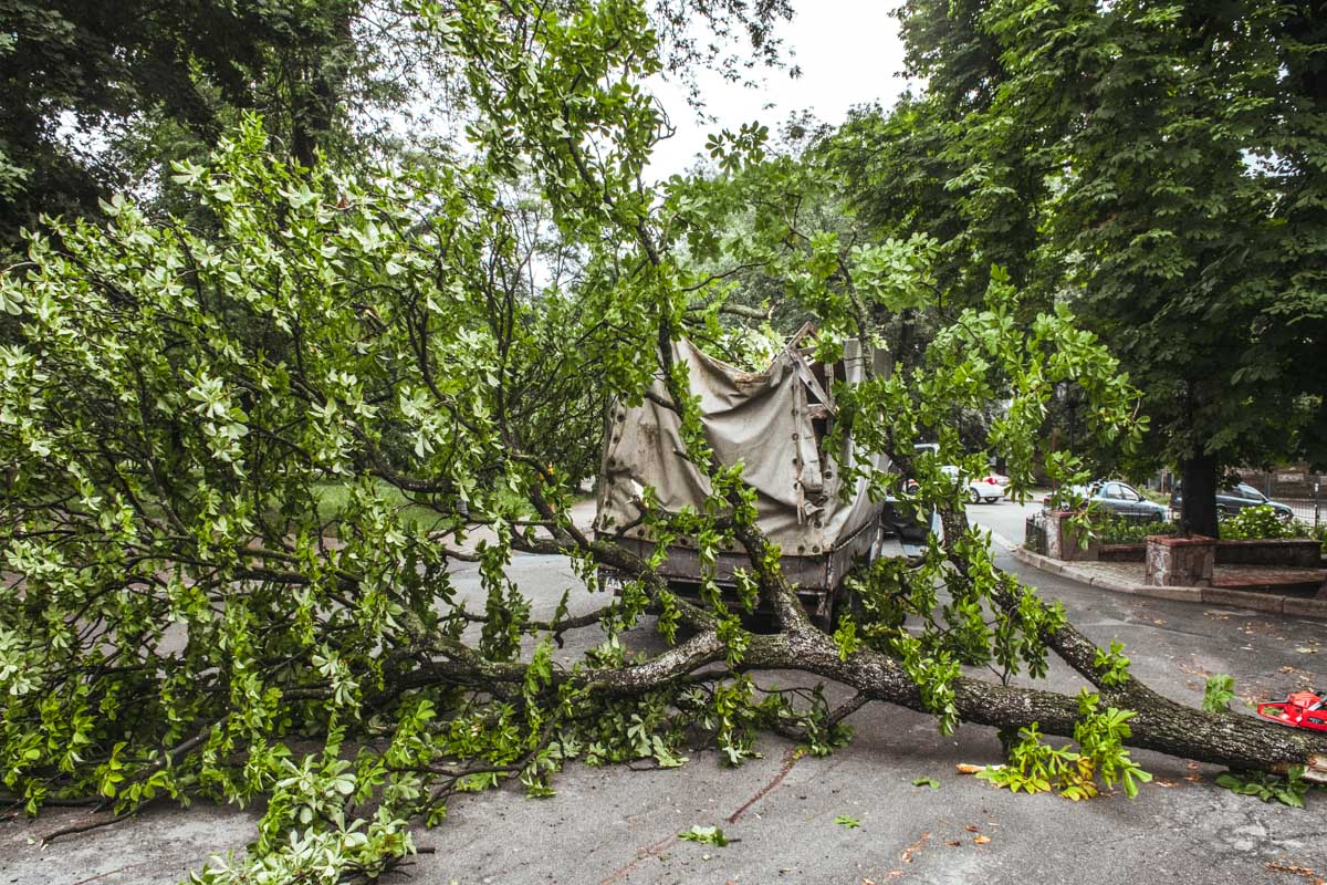 В Киеве дерево упало на ГАЗель